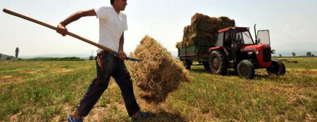 Eλληνικό application λύνει τα χέρια των γεωργών