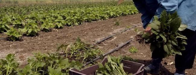 Στους αγρότες και στον τζόγο ψάχνουν για ισοδύναμα