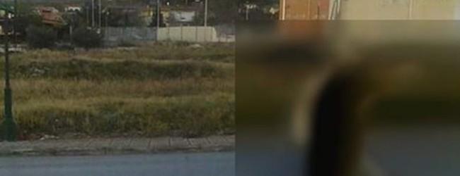 Κτηνωδία: Σκότωσε σκύλο και τον κρέμασε σε πινακίδα σήμανσης