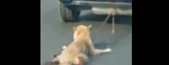 Ενα χρόνο φυλακή σε 69χρονο για βασανισμό και θανάτωση σκύλου