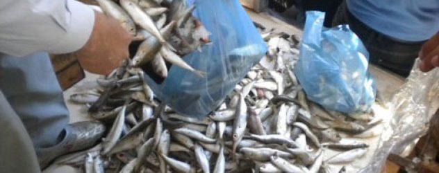 Αλμυρός: Πρόστιμο 5.000 € για πώληση ψαριών χωρίς άδεια