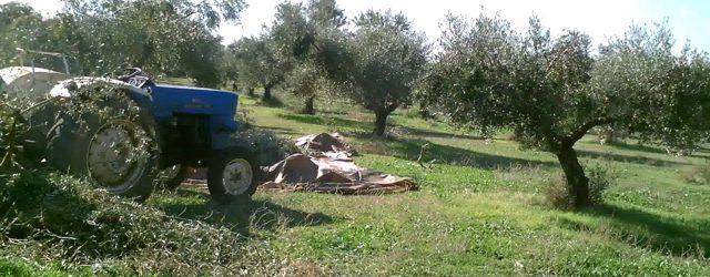 Πήλιο: 60χρονος πέθανε ενώ μάζευε ελιές