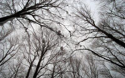 Το πρώτο χιόνι έπεσε χθες στο Πήλιο