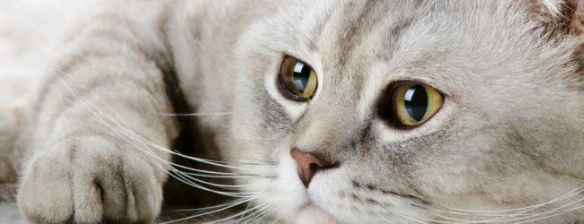 Απίστευτη αγριότητα ανήλικων στην Ορεστιάδα – Βανδάλιζαν νεκρή γάτα