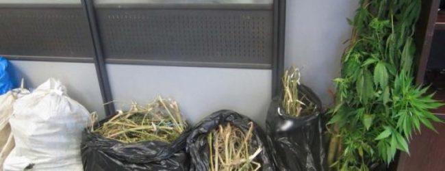 Συνελήφθη 46χρονος στην Ελασσόνα με 17 κιλά χασίς