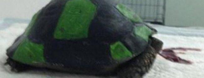 Σοκ! Έκαναν τη χελώνα μπάλα ποδοσφαίρου! (σκληρές εικόνες)