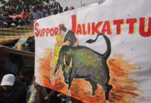Με αίμα βάφτηκε ροντέο με ταύρους στην Ινδία