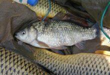 Αλίευσαν παράνομα από ταμιευτήρα στη Λάρισα 230 κιλά ψάρια!