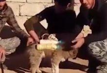 Βίντεο-σοκ: Τζιχαντιστές χρησιμοποιούν σκύλους για βομβιστές αυτοκτονίας