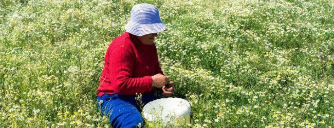 Περικοπή σύνταξης έως 60% για τους συνταξιούχους που έχουν αγροτικό εισόδημα- Ποιοι εξαιρούνται