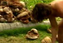 Οι πρώην «Μαχητές» τρώνε μπέργκερ με ανανά και ο Σπαλιάρας κόβει καρύδες