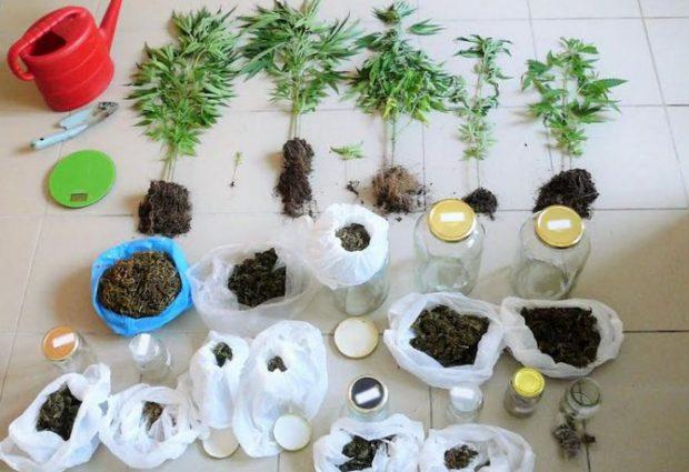 «Φυτεία» χασίς στις Μηλιές από 59χρονο