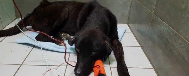 Βόλος: Έκλεισε τον άρρωστο σκύλο στην σακούλα και τον πέταξε ζωντανό στα σκουπίδια