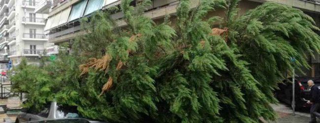 Δέντρο έπεσε πάνω σε αυτοκίνητα στη Λάρισα (photos)