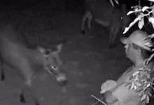 Αδιανόητο: 49χρονος προσέγγιζε με καρότα θηλυκά γαϊδουράκια κι ασελγούσε πάνω τους! (photos)