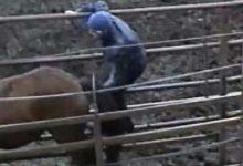 Τον έπιασε στα πράσα να κάνει σεξ με άλογο – Έξαλλη η «απατημένη»