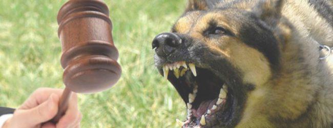 Δύο έτη φυλάκισης σε ιδιοκτήτες σκύλου – 77χρονη πάλεψε να σωθεί από τσομπανόσκυλο