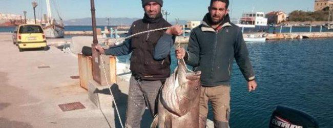 Εκαναν την ψαριά της χρονιάς -Εβγαλαν σφυρίδα 63 κιλών [εικόνες & βίντεο]