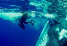 Εκπληκτικό: Τεράστια φάλαινα σώζει δύτη από επίθεση καρχαρία