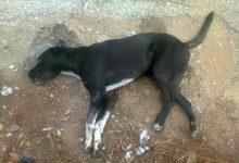 Ζάκυνθος: 22 μήνες φυλάκιση σε 46χρονο που πυροβόλησε και σκότωσε σκύλο