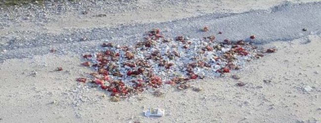 «Μπάλωσαν» λακκούβες σε δρόμο με… σπασμένα πιάτα και γαρύφαλλα από μπουζουξίδικο!