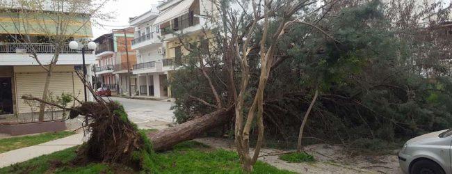 Λάρισα: Ξεριζώθηκε δέντρο από το δυνατό αέρα στην πλατεία στα Ηπειρώτικα