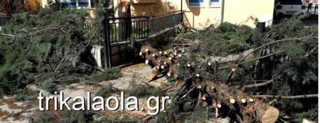 Σφοδρή ανεμοθύελλα έπληξε τα Τρίκαλα- Ξεριζώθηκαν δέντρα, ξηλώθηκαν σκεπές (photos & vid)