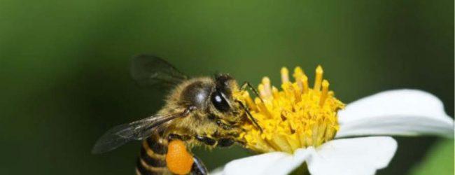 Τρίκαλα: 32χρονος πέθανε από αλλεργικό σοκ έπειτα από τσίμπημα μέλισσας
