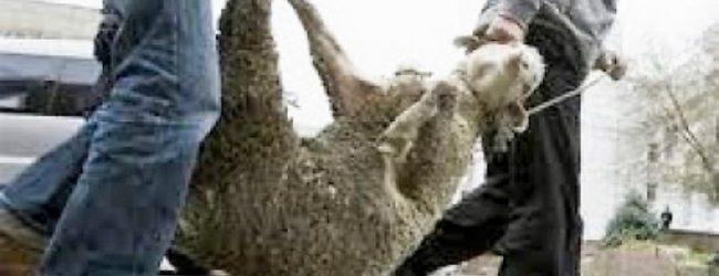 Στη φυλακή φυγόποινος που έκλεψε και θανάτωσε ζώα στα Τρίκαλα