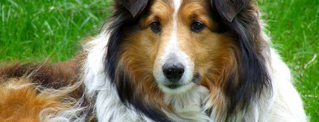 Βόλος: Φυλάκιση σε ιδιοκτήτρια σκύλου για πρόκληση σωματικής βλάβης