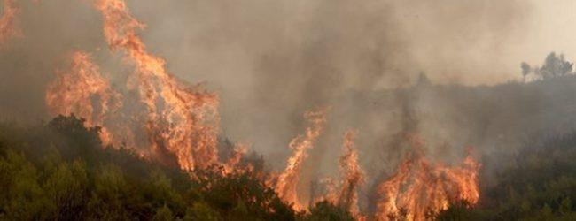 Φωτιά σε δασική έκταση στην Κερασιά