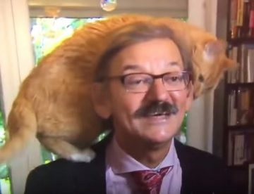 Viral βίντεο: Γάτα σκαρφάλωσε στο κεφάλι καθηγητή που έδινε συνέντευξη