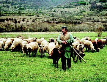 Για «πάρτι διαρκείας» στο γάλα μιλούν οι κτηνοτρόφοι της Θεσσαλίας