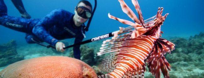 Συναγερμός για τοξικά ψάρια στο Αιγαίο – H εισβολή συνεχίζεται