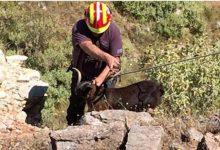 Επιχείρηση διάσωσης κατσικιών που έπεσαν σε χαράδρα στην Αλικόπετρα