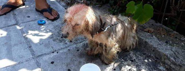 Φρίκη στην Κέρκυρα: 62χρονος περιέλουσε σκυλάκι με πετρέλαιο