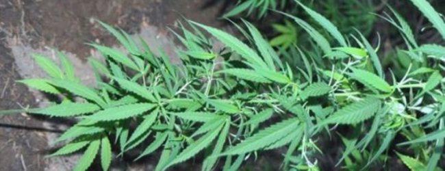 Τρεις συλλήψεις για ναρκωτικά σε αστυνομικούς ελέγχους στον Βόλο